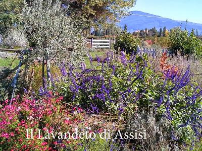 Giardino botanico Assisi