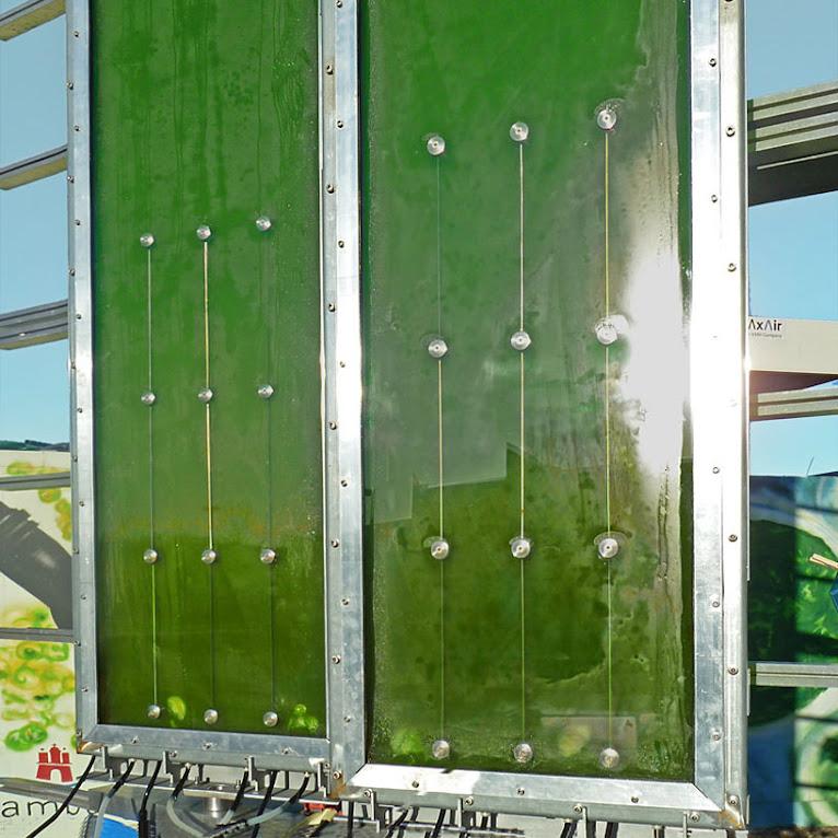 *真正的綠能建築BIQ:建築師Splitterwerk由海藻產生電能! 5