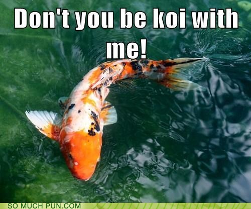 photo of a koi swimming in a pond...don't be koi with me