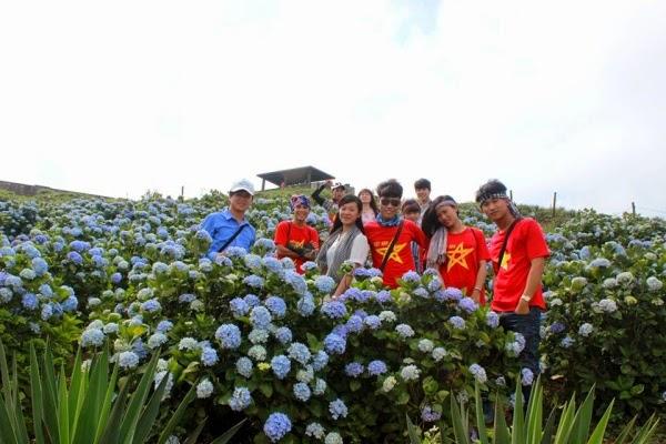 Vườn hoa cẩm tú cầu trên Mẫu Sơn
