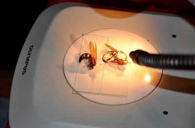 Bugfest 2011 d