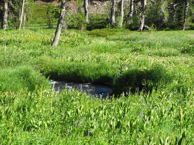 King's Creek Meadow