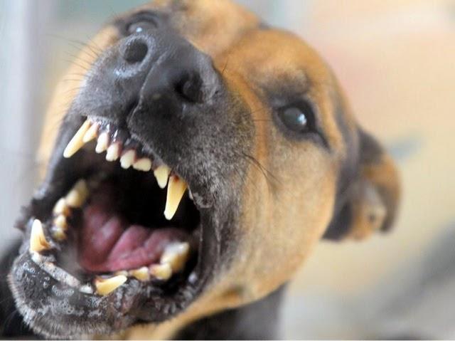 min hund knurrer af mig