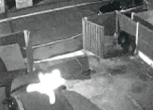 CCTV rakam hantu budak