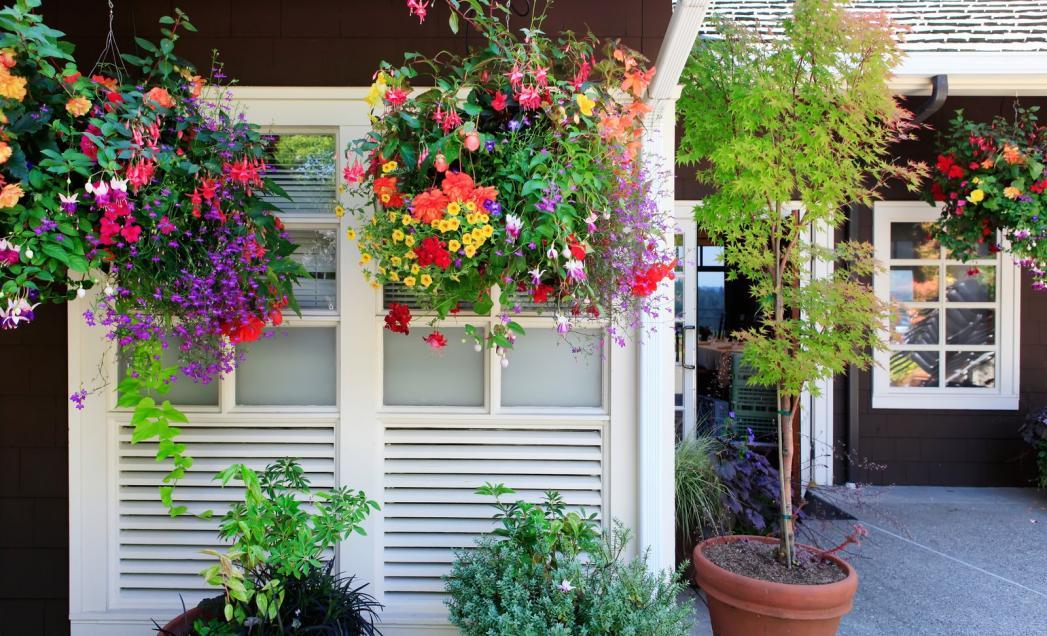 http://streaming.yayimages.com/images/photographer/iriana88w/e5f5d6b03cef0380408eb8d709ae3d83/flowers-in-the-hanging-baskets-with-white-windows-and-brown-wall.jpg