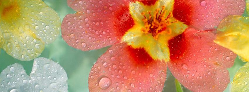 ảnh bìa hoa đẹp rực rỡ