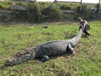 Questões e Fatos sobre Crocodilianos gigantes: Transferência de debate da comunidade Conflitos Selvagens.  - Página 3 Middle_1254697638