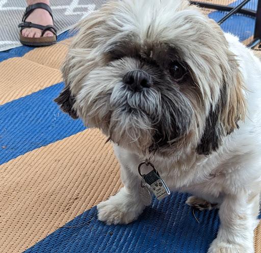 Patti Mills