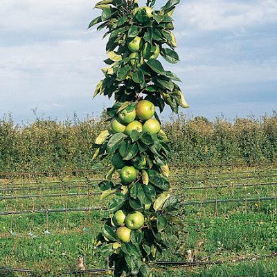 J 39 ai test pour vous les fruitiers nains initiales gg - Bouillie bordelaise sur arbres fruitiers en fleurs ...