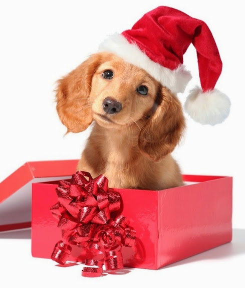 Image result for dog christmas gift