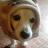 Mreeljerhal avatar image