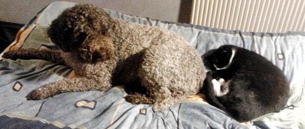 Primo och Odd delar säng