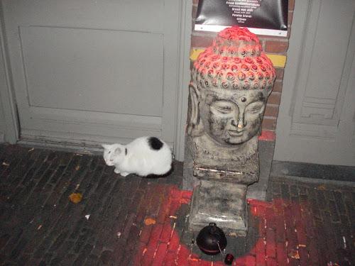 Utrecht Gatto e scultura
