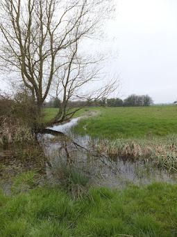 Marshy meadows to the Geldeston Locks