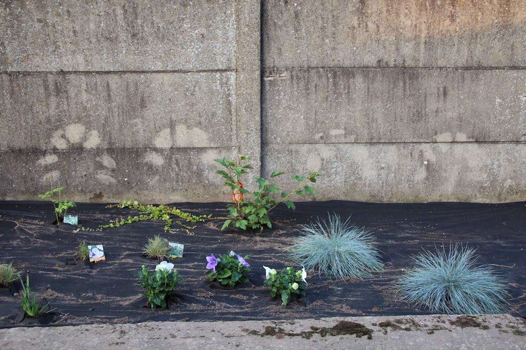 Nouvelle maison dit aussi nouveau jardin... IMG_9530