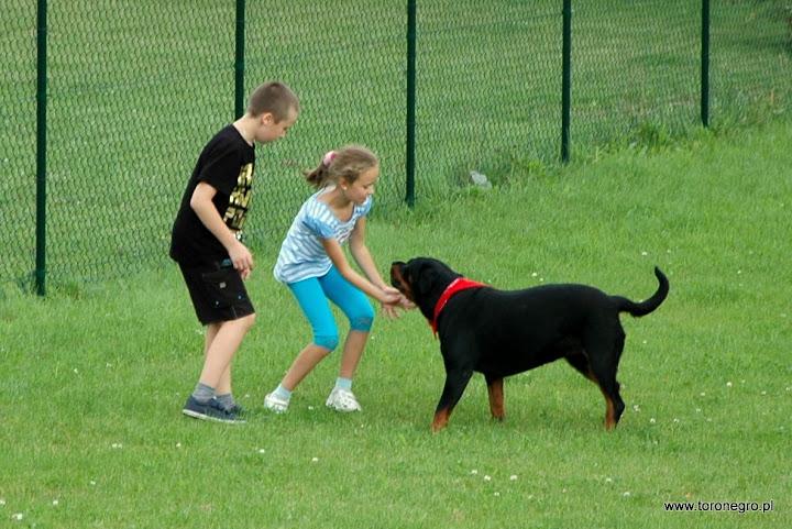 Rottweiler i małe dzieci