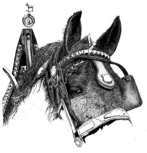 Percheron_Greyhavenart-2012-09-9-07-09.jpg