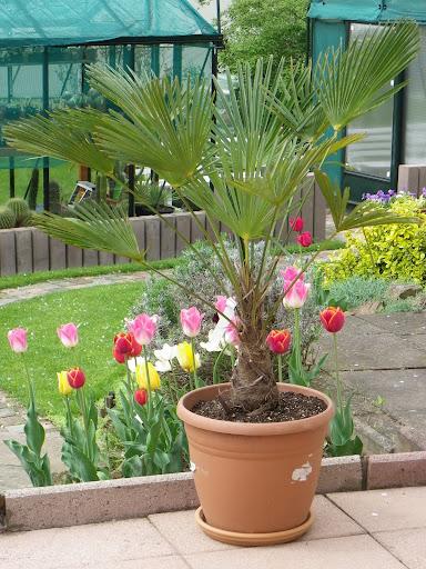 Quelques fleurs IMGP5854