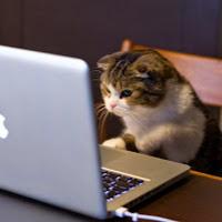 Dilek_Koc kullanıcısının profil fotoğrafı