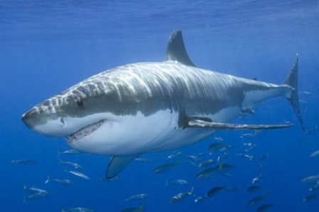 shark attack pictures on humans. only attack hapless humans