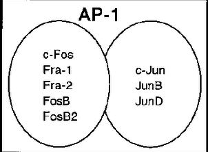 Adapted AP1.png