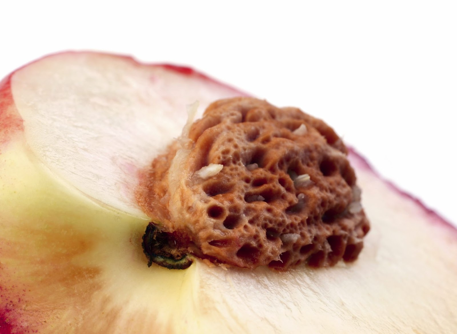 Can dogs eat white peaches