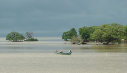 Mangrove, sea and fisherman's boat