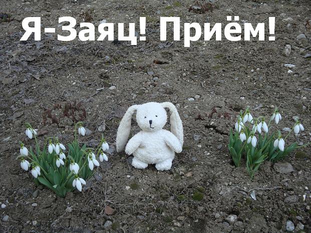 активные игрушки: заяц