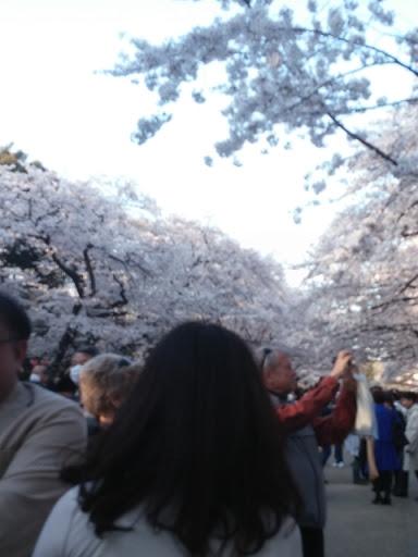 また上野恩賜公園で今度は2○歳とお花見。