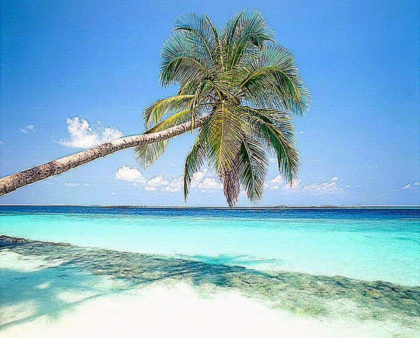 Beach Palm Tree Wallpaper Beach Palm Tree Wallpaper Top