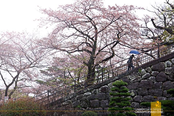 Climbing to Kanagawa's Odawara Castle