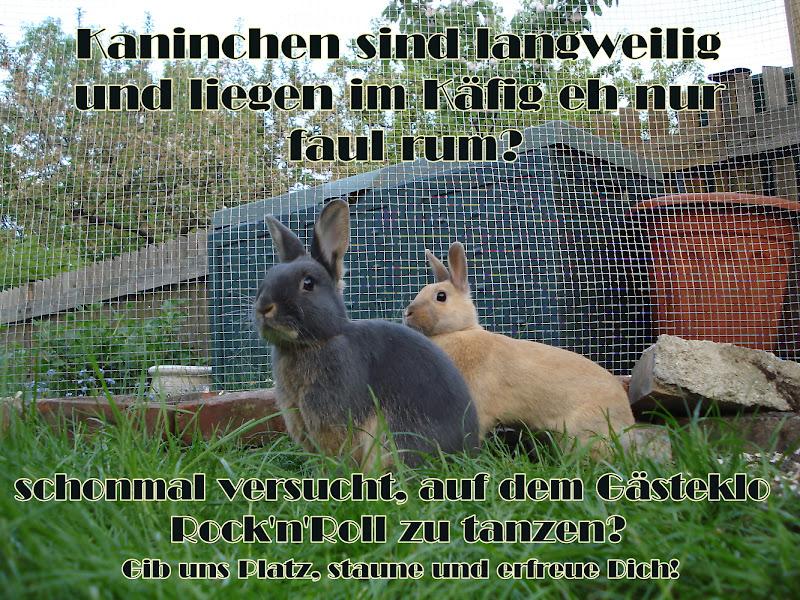 Kaninchen Referat