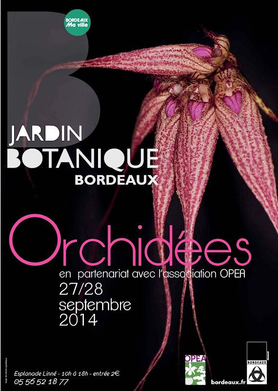 orchid%25C3%25A9es%2520A0-04%2520%25282%