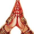 Praveen Durga