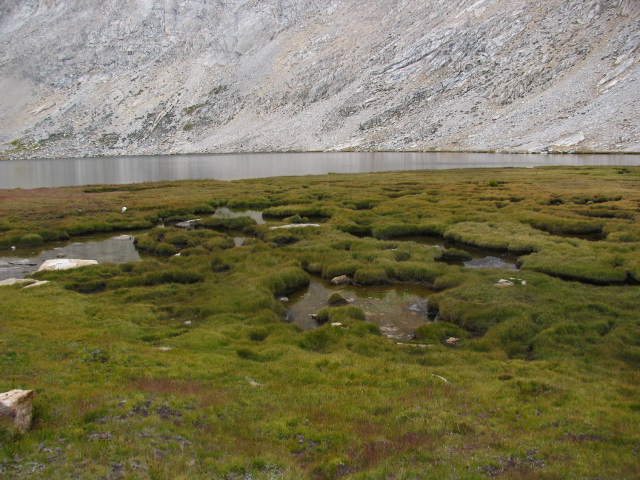 grassy area at the head of the lake
