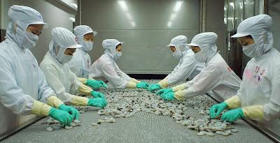 Đơn hàng chế biến thủy sản cần 9 nữ thực tập sinh làm việc tại Toyama Nhật Bản tháng 05/2016