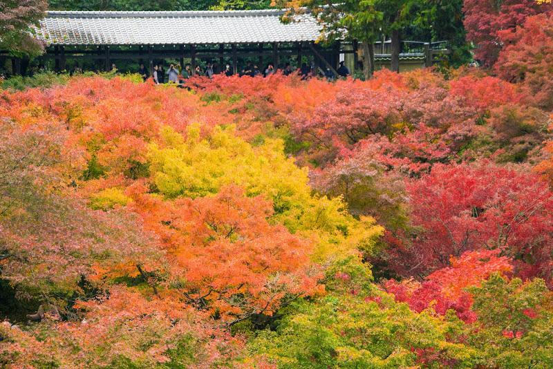 京都 東福寺 紅葉 写真2