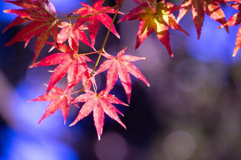 府中の森公園 紅葉 写真21
