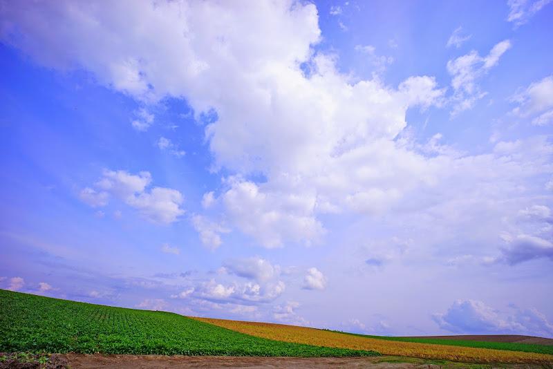 美瑛 ルベシベの丘 写真1