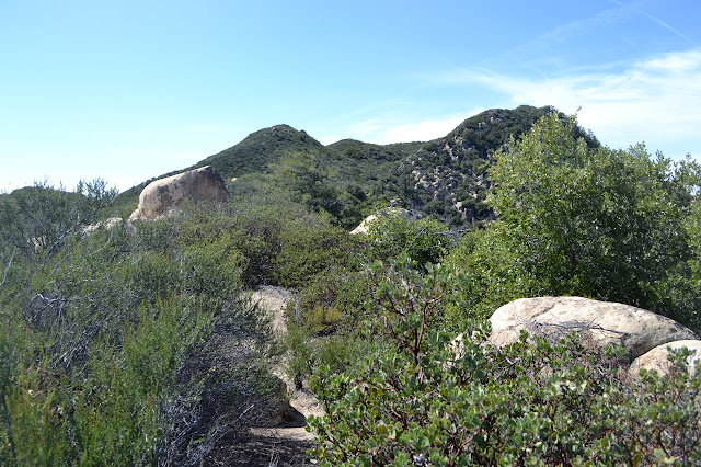 ragged trail through the manzanita