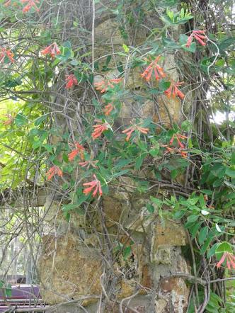 goGardenNow: Behind A Garden Wall: Ravine Gardens State Park ...