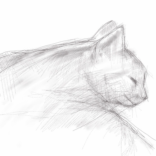 grey cat sketch
