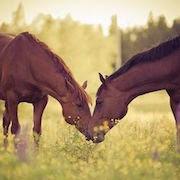 к чему снится черная лошадь?