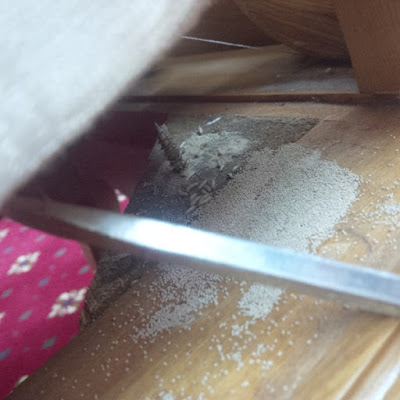 Khảo sát phát hiện mối gỗ khô