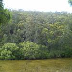 Cowan Creek (25418)