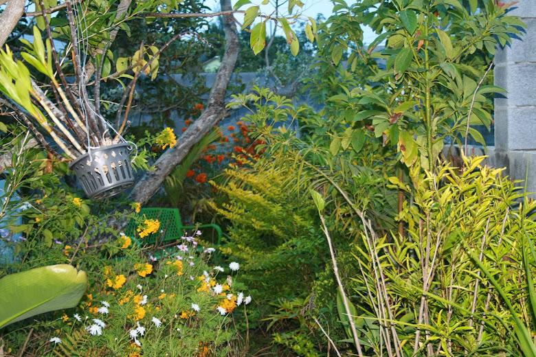 Futur jardin d'orchidées!!! - Page 2 IMG_4057