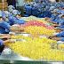 Tuyển 9 nữ làm công việc chế biến đóng gói sản phẩm thạch rau câu tại Yamagata Nhật Bản tháng 08/2017