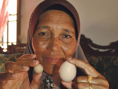 Telur ayam sebesar guli