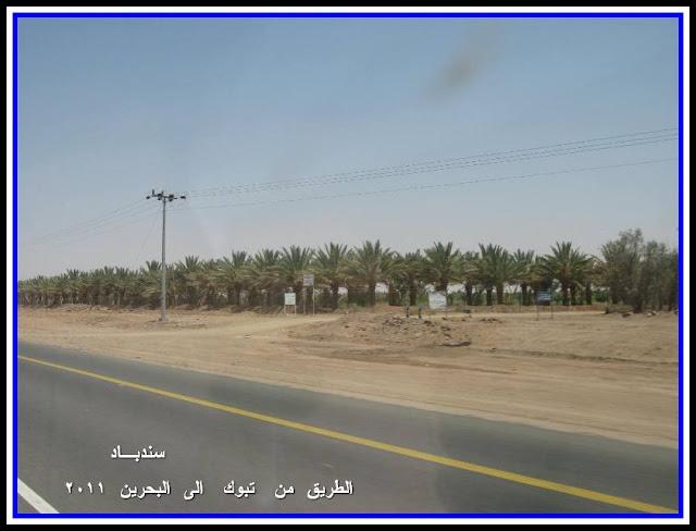 البحرين سندبـاد IMG_1705.JPG