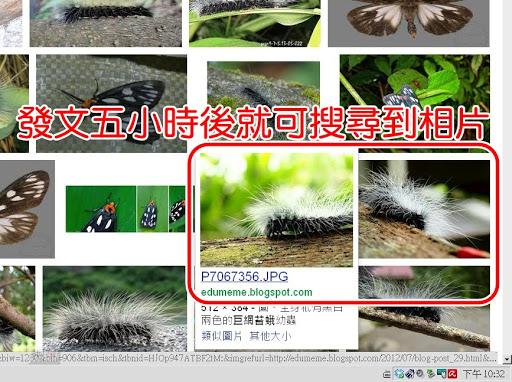 發文後五個小時,巨網苔蛾相片就已經出現在搜尋的第一頁